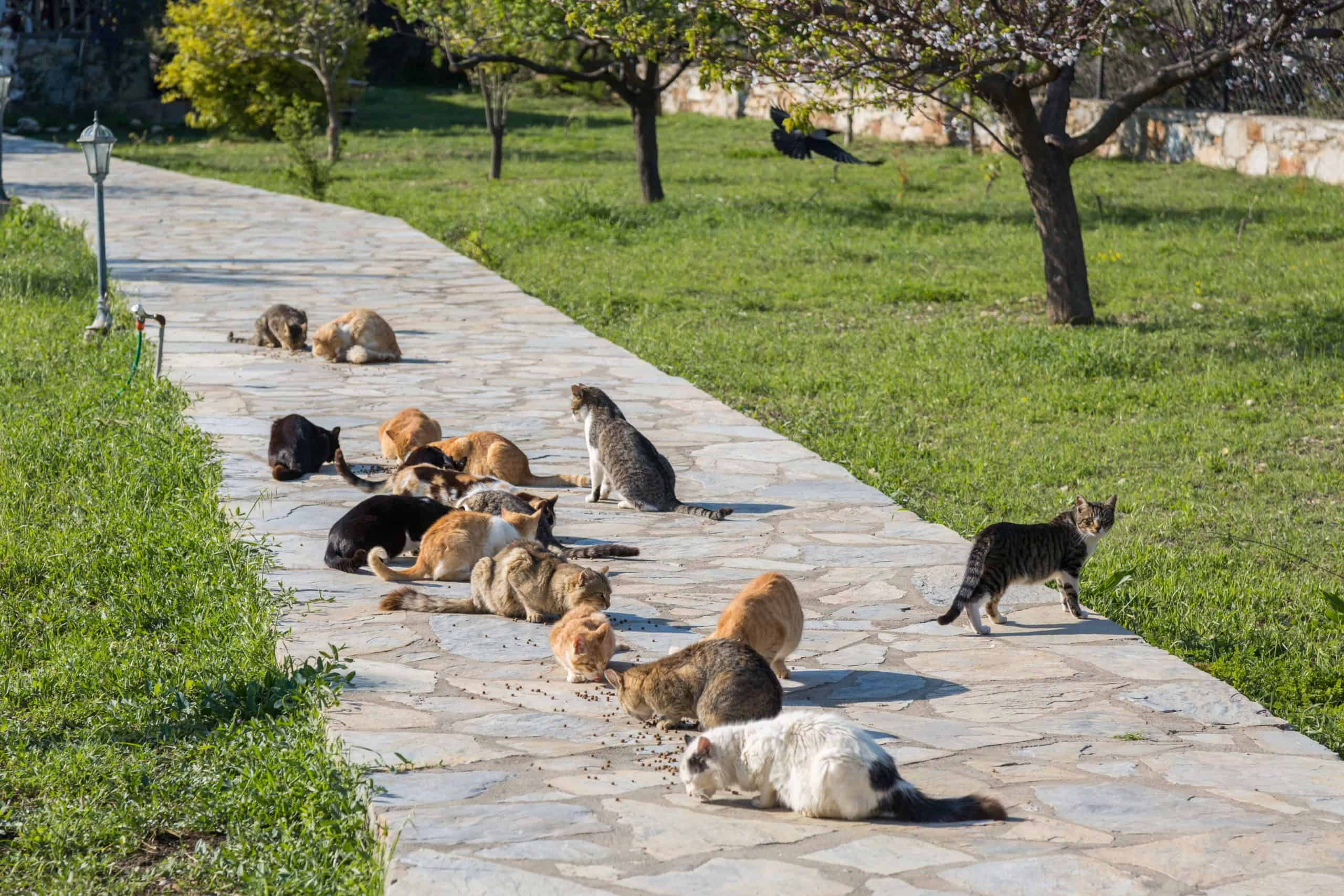 supplier management - Is Supplier Management like Herding Cats?